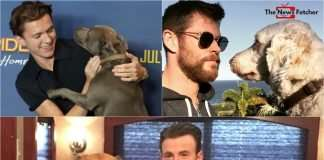 Marvel-Actors-and-their-pet-dogs.jpeg