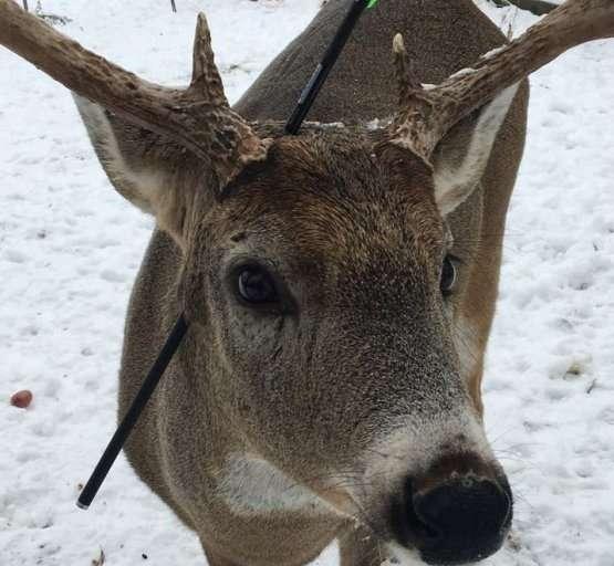 deer-with-arrow-in-his-head